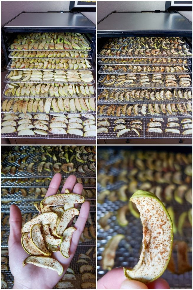 A four way image collage, the first image shows seven stainless steel drying racks filled with the sliced apples that have been seasoned with cinnamon. The racks are now inside the dehydrator but have been arranged in a stair step pattern so each tray and its contents are visible. The second image shows the same setup as the first, yet now the apples have finished drying. They are slightly smaller in size and the shape of the slices have slightly changed during the drying process. The third image shows a hand holding a small amount of the dried apples with the drying racks left in the dehydrator as the background. The fourth image is a close up of on of the apples slices, it shows the skin slightly overhang the flesh by a small margin and the slice is dusted with cinnamon. The background displays one of the drying racks with dried apples on it.