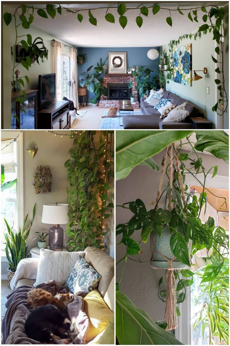 A three part photo collage that shows the various types of hanging possibilities for different houseplants. Some are trained along the edge of a wall using hooks, others are allowed to hang straight down.