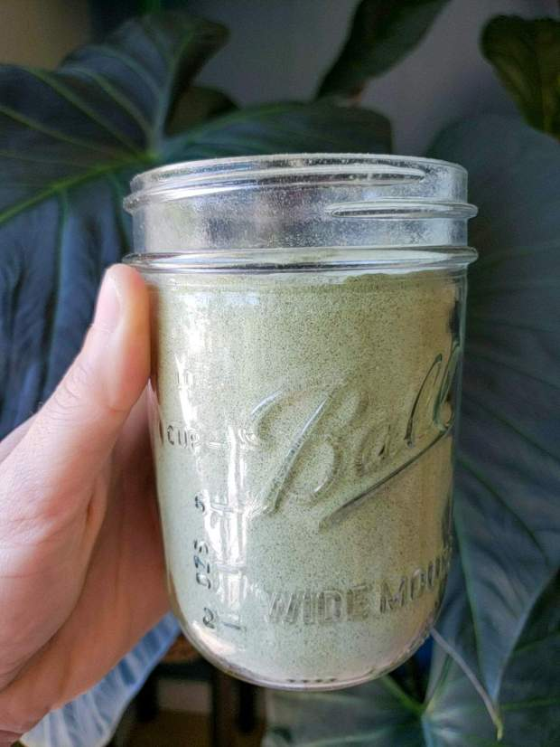 A close up image of a hand holding up the mason jar that is full of dried onion powder. the backdrop is a large and dark green houseplant, making the jar of onion powder stand out in contrast.