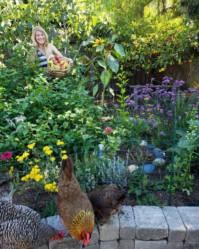 DeannaCat is standing on the far side of a raised stone pollinator island. She is holding a basket of apples and is standing next to a fig tree that has blended in with the rest of the trees in the background as well as all of the perennials in the foreground. There are also three chickens sitting on the edge of the stone island in the immediate foreground, the colors of the image range from mostly greens to purple, yellow, and some pink.
