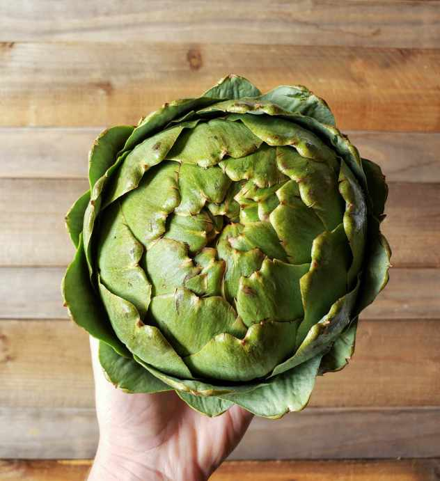 A birds eye view of a hand is holding a large globe artichoke by the stem and body area, the top is pointing upwards. The back drop is barn wood.