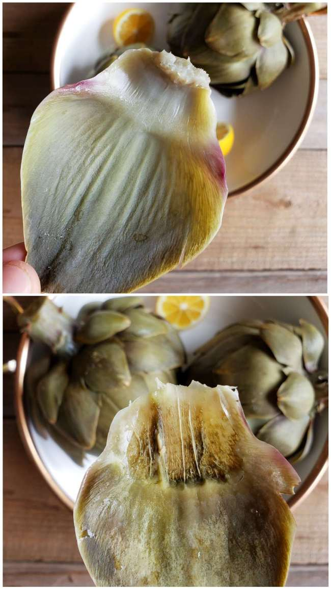 A two part image collage, the first image shows fingertips, holding a single cooked artichoke leaf by the tough end and the inner meaty portion of the leaf on the opposite side. The second image shows the leaf after it has been eaten. You can see teeth marks on the flesh side on about 1/3rd   of the leaf.