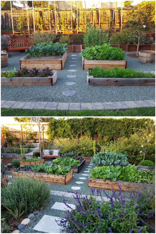 A two part image collage, the first image shows four raised garden beds, surrounded by green gravel. Beyond that there is a wooden terrace with two levels, the first level has various pollinator plants planted in it. The second top level has six trellises spaced along the fence, the trellises are bare although you can make out small plants growing up each one. The plants are an assortment of fruiting and flowering passion fruit vines. The second image shows the same area but after many years of growth. The back trellis wall is now a green wall of vines. The other pollinator plants have continued to grow and are much larger than before. The entire area is much more green and lush than the previous image.