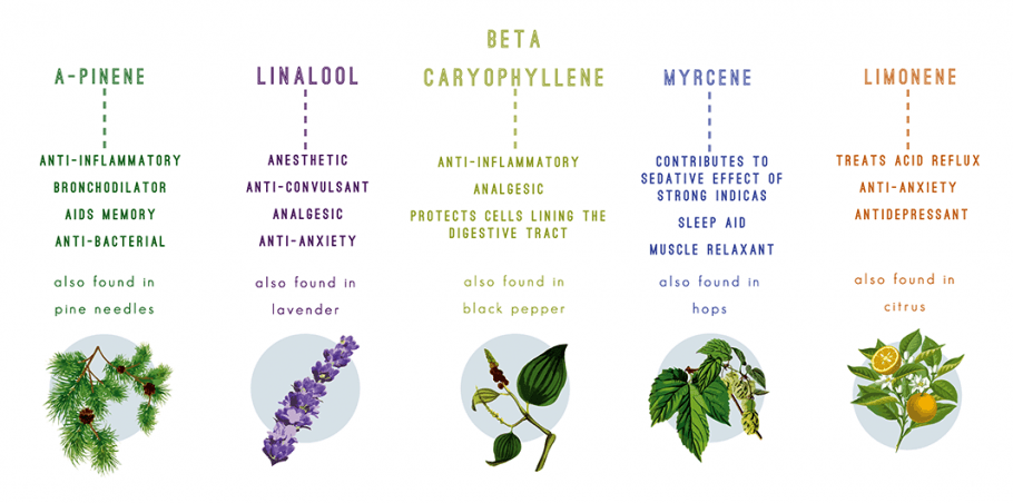 A chart is depicted with the common cannabis terpenes, they are A-pinene, linalool, carophyllene, myrcene, and limonene. The aromas and flavors range from pine, lavender, black pepper, hops, and citrus. While each has there own medicinal, from sleep aid, anti-anxiety, to anti-depressant.