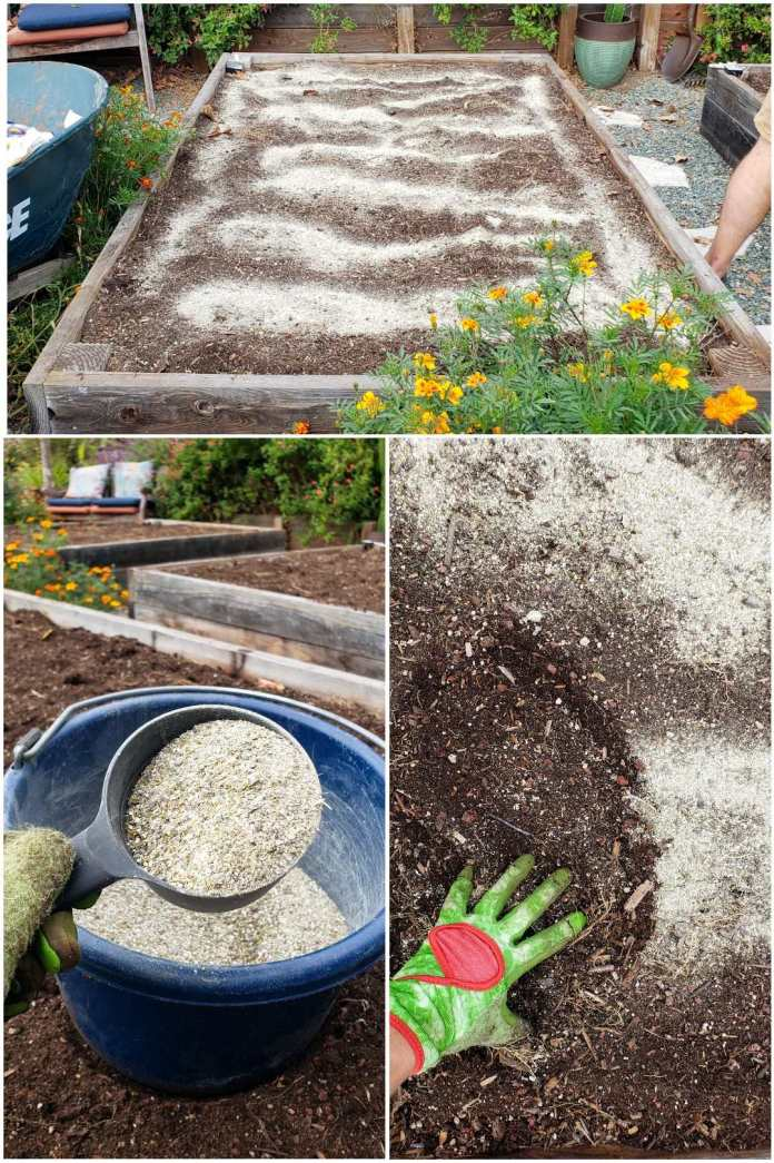 A three part image collage, the first image shows a garden bed that is empty of plants yet is full of soil. There  is a whitish dust spread throughout the top of the soil. There is a wheel barrow next to the garden bed, as well as various marigolds. The second image shows a blue bucket sitting on top of an empty garden bed, a hand is holding a measuring cup of sorts directly above the bucket where the measuring cup and bucket both contain various amendments used to feed the soil and the plants that will soon be planted in it. The third image shows the top of a garden bed, the soil has been sprinkled with the amendments, and a gloved hand is starting to scratch the amendments into the soil, mixing it into the top inch or so. Using slow mild, slow release fertilizers are just one of the ways to increase microbial life in no-till gardening.