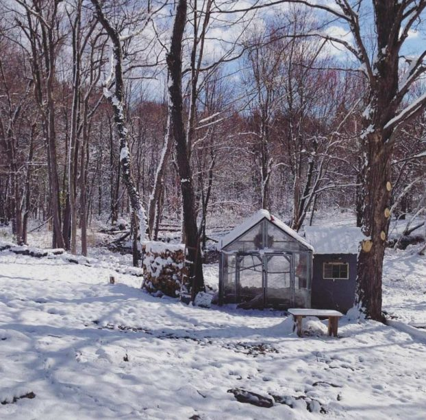 A greenhouse and a chicken coop are nestled between two large trees. It is the middle of winter as seen by the snow that has accumulated on the ground, trees, coop, and greenhouse. There is a forest of trees behind the coop and they have all lost their leaves and are quite bare. The sun is out, casting shadows from trees nearby.