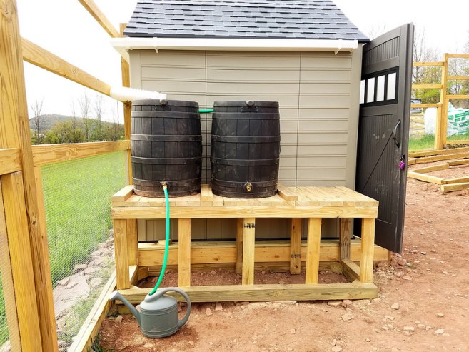 A rain water collection system shown next to a plastic shed, the smaller rain barrels are connected to a downspout which is connected to a gutter that is hanging from the sheds roof.  The barrels are elevated on a wooden platform and a hose is connected to one of the barrels hose bibs which is filling a watering can.