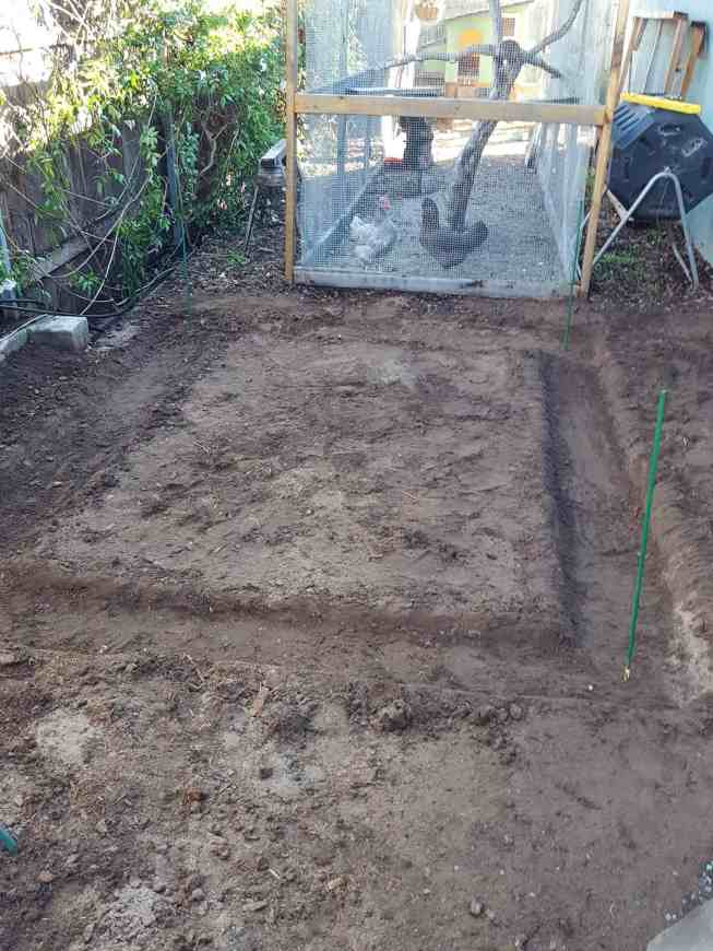 Three lines are now gone after the soil has been dug down to make a trench the width of the lines that were once drawn. The center of the rectangle is now higher ground after the trench has been dug. There are two chickens observing the work from the chicken run in the background.