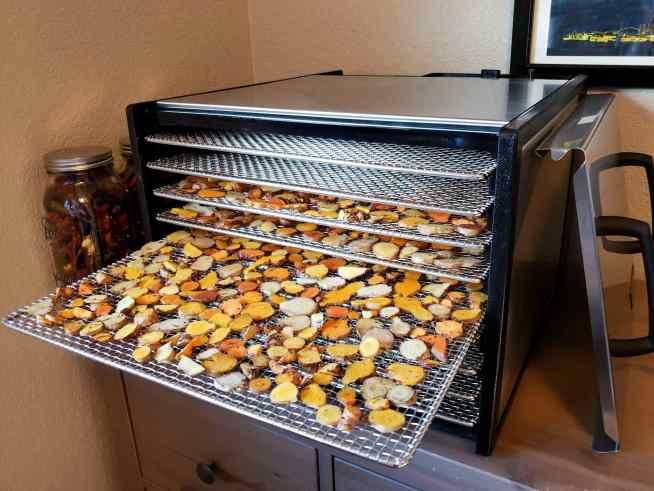 An Excalibur dehydrator is shown with three stainless steel racks full of slices of fresh turmeric. One of the racks has been pulled out in a stair step fashion to better show the slices of turmeric rhizomes.