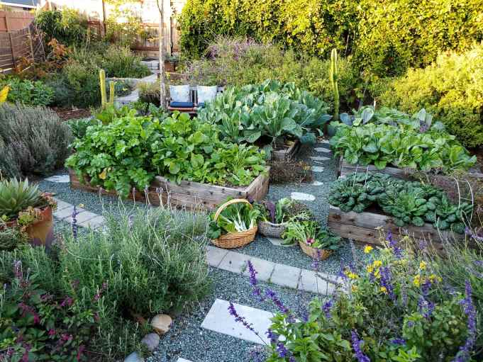 A garden is shown, there are four raised wooden garden beds shown with many shrubs, perennials, and trees scattered amongst the yard. In between the garden beds sit three baskets with an assortment of freshly harvested vegetables.