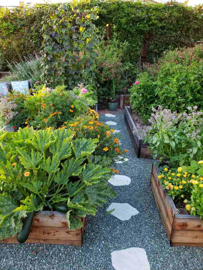 Raised garden beds are shown with squash plants  an their fruit hanging over the edges of the bed. There are various flowers such as calendula, marigold, borage, and zinnia. Tomatoes and another squash plant can be seen towards the back beds while a trellis with purple pole beans takes up the end of one of the beds.