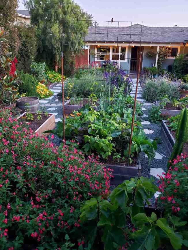 A front yard garden looking towards a house, the garden is full of pink, purple, orange, yellow, and magenta flowering plants There are raised garden beds that contain a variety of vegetables. A hummingbird is perched along a structure in the top portion of the image.