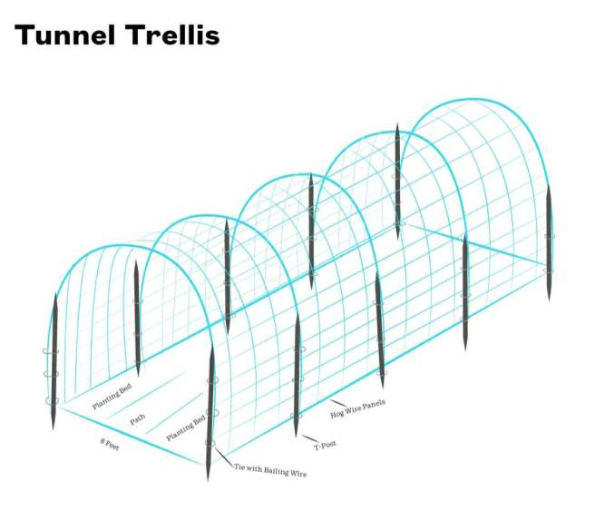A diagram of a DIY archway using hog wire panels, t-posts, and bailing wire.