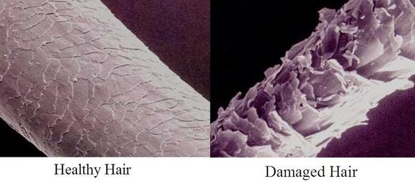 A diagram showing a microscopic image of a healthy hair follicle next to a damaged hair follicle.