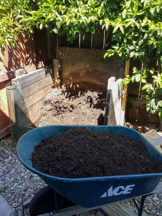 A wheel barrow sits in the foreground full to the brim with freshly made compost that is dark black in color. In the background there is a three sided wooden stall that is nearly empty now that the finished compost has been harvested from the bin. Using the hot pile method is efficient and effective when you want to make compost quickly.