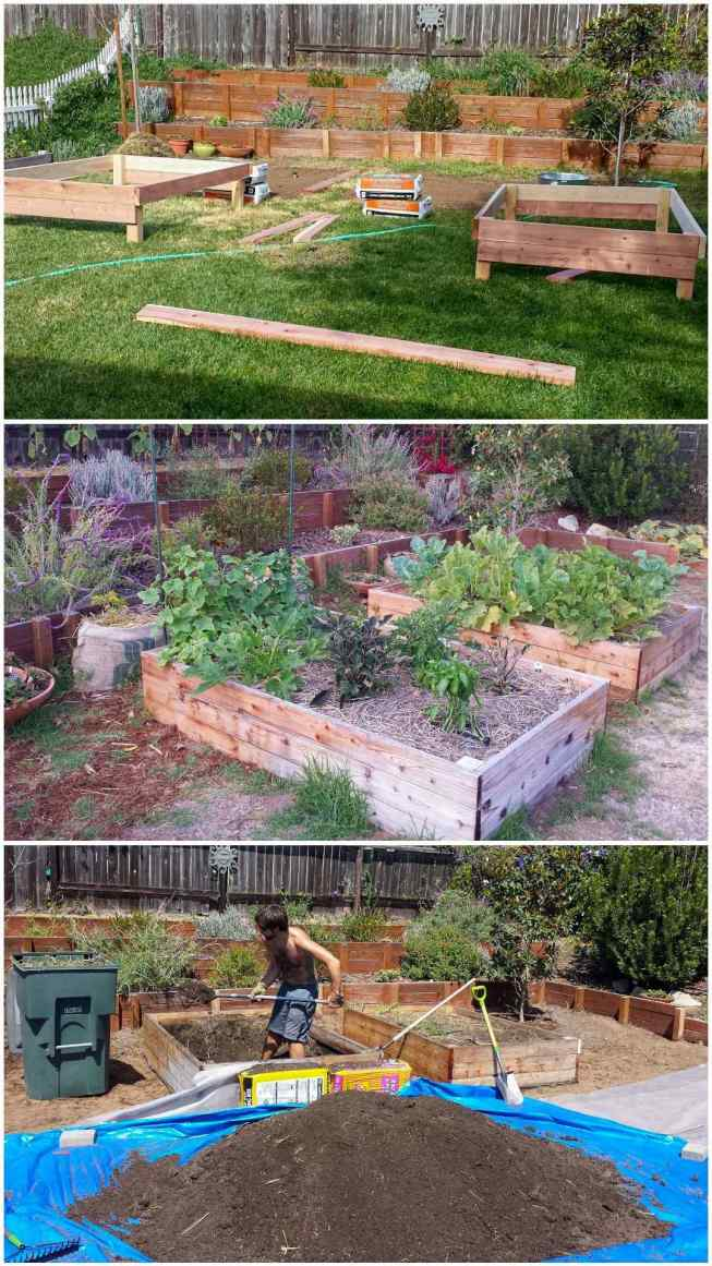 A three part image collage, the first image shows raised garden beds halfway through construction, there are two similar sized patches of dirt where the grass has been removed as a place for the garden beds. The second image shows the garden beds after four of six months of use and there are weeds growing up and around the garden beds amongst the vegetables, the third image shows Aaron removing the soil from the beds because they are infested with weeds and the space needs to be redone to do it correctly. This was a lesson learned through trial and error.