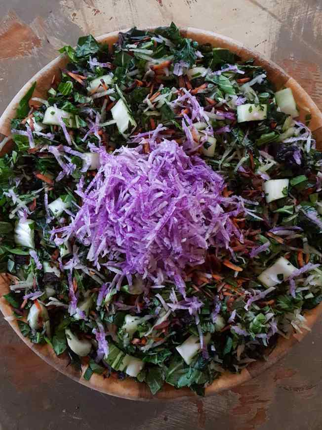 A large wooden bowl is shown full of various chopped veggie greens and grated carrots. There is a large pile of shredded purple daikon radish sitting atop the middle of the chopped greens, waiting to be mixed in with salt.
