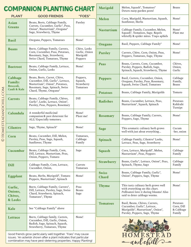 """A companion planting chart that lists many types of vegetables in one column, their beneficial companion plants in another, as well as their suspect """"foes"""" in the final column."""