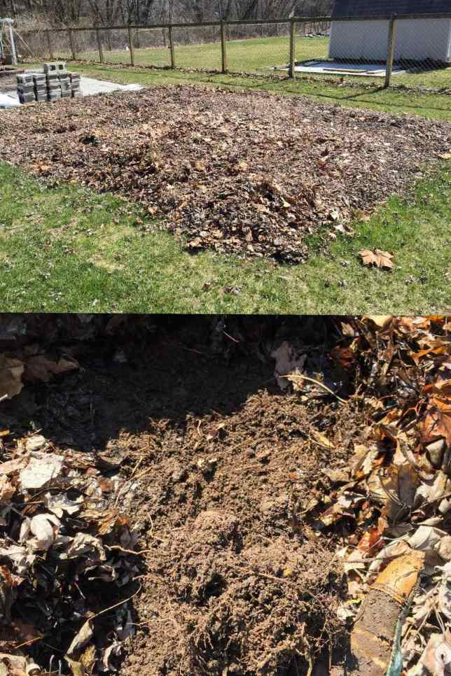 A two way image collage of how to remove grass by deep mulch. The first image shows a large rectangular area cover in a foot or two of fallen leaves. The second image shows underneath the leaves after a number of months have passed, the grass beneath has died with only dead roots left behind.