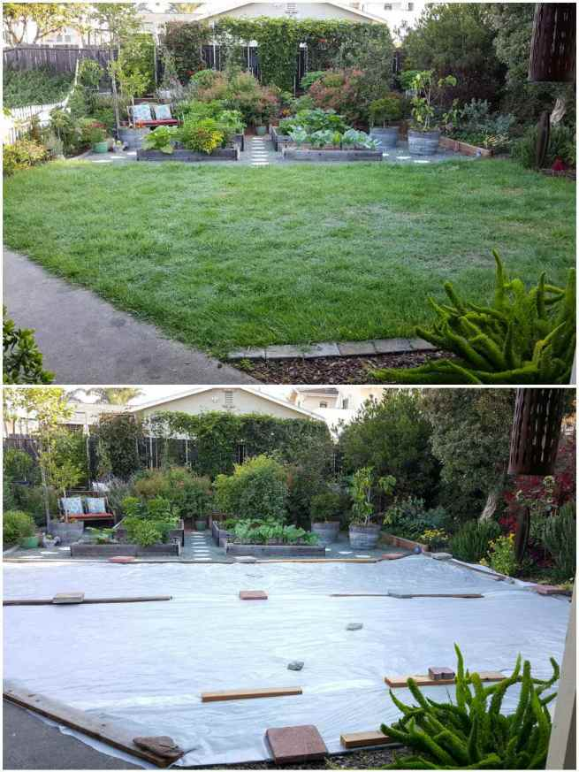 A two way image collage, the first image shows the front yard with lush green grass in the front with a hardscaped back half of yard full of raised garden beds, vegetables, vines, shrubs and perennial plants. The second image shows the same yard area after the front half of grass has been covered with clear plastic sheets. The plastic has been waited down throughout the area with bricks, boards, and pavers to keep it taught. This is an effort to solarize the lawn to remove grass.