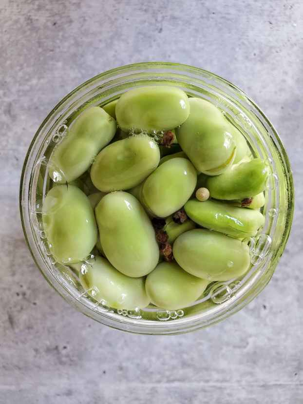 A close up image of the top of an open quart Mason jar filled to the brim with shucked fava beans soaking in vinegar with a few floating peppercorns.