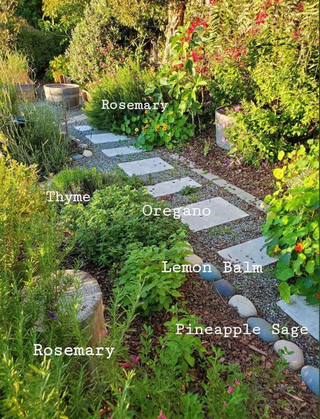 An image of a portion of the front yard, intermixed amongst the various plants in a variety of areas are herbs such as rosemary, thyme, oregano,  lemon balm, and pineapple sage. Each one has its name superimposed on the image where that particular herb is growing in the yard. Illustrating that a kitchen herb garden can be grown in a variety of ways and places.