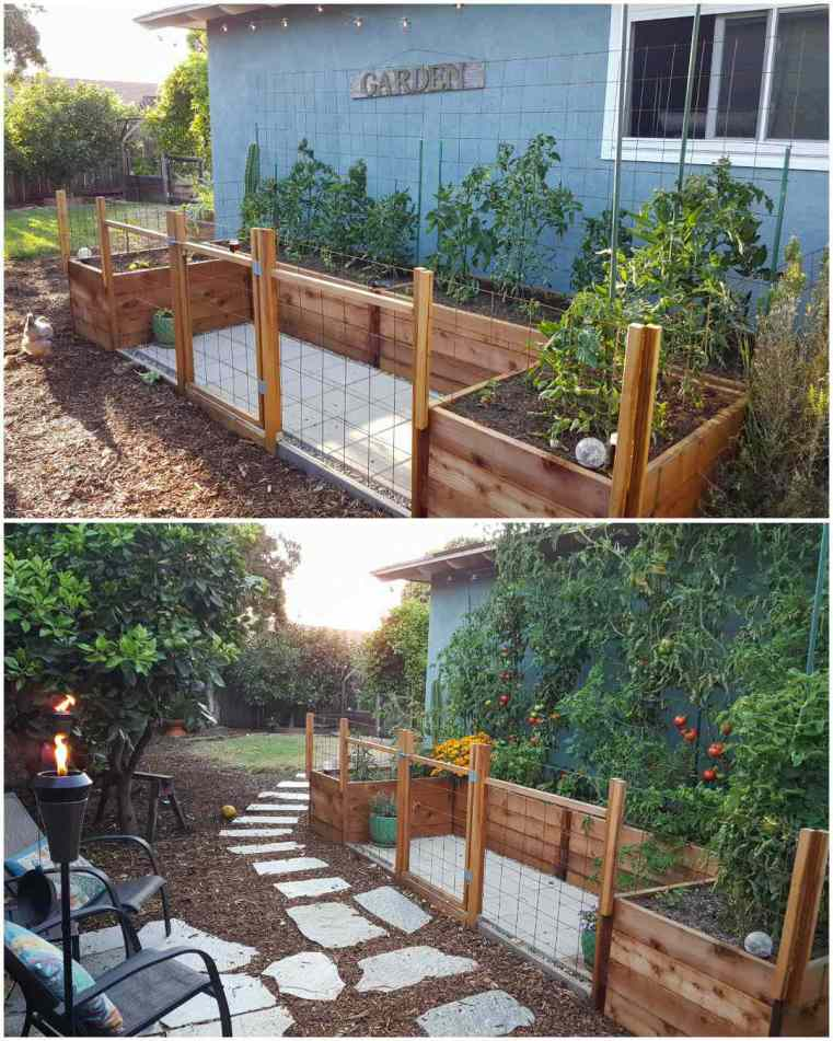 A two part image collage of a U-shaped garden bed area that is butted up against the side of a blue green house. The first image shows the raised beds planted out with young tomato plants, along the backside of the garden beds are trellises that will be used to help the tomatoes climb as they grow. The surrounding area of the garden bed area has been fenced off with remesh and wood, creating a mini fence and gate. The second image shows the same area months later, the tomatoes have grown the the roof of the house and there are many green and ripe tomatoes that are contrasting against the green foliage of the tomatoes. There are two chairs visible directly outside of the garden area and a tiki torch is lit next to the chairs.