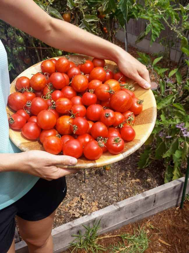 DeannaCat is holding a large wooden bowl supported by her hip as one would while holding a child. The bowl is full of red tinged tomatoes of small to medium size.
