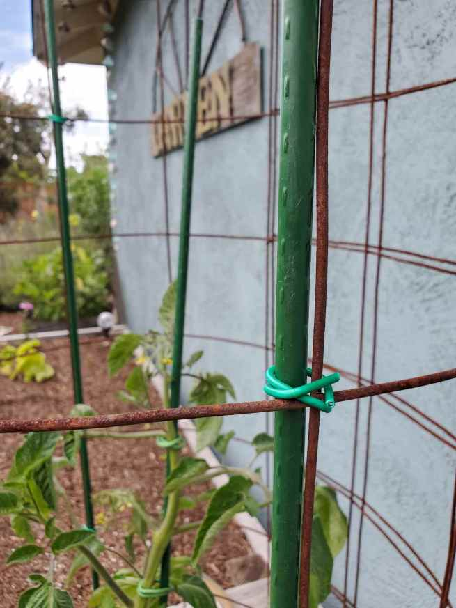 A close up image of the tomato cage and the stake attached to the side of the cage. Hard green garden wire has been used to attach the stake to the tomato cage.