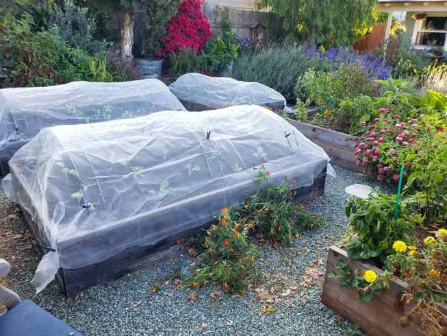 Raised garden beds with row covers shown tucked around the outside edges of the beds and held tightly together with clothespins. There are various flowering perennials growing around the beds with pink, orange, yellow, purple, and red flowers amongst varying shades of green.