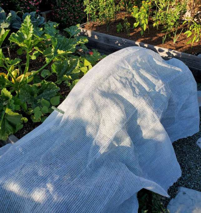 Shade cloth is draped over one section of a raised garden bed, leaving the rest of the bed and its sun loving plants open to the sun above.