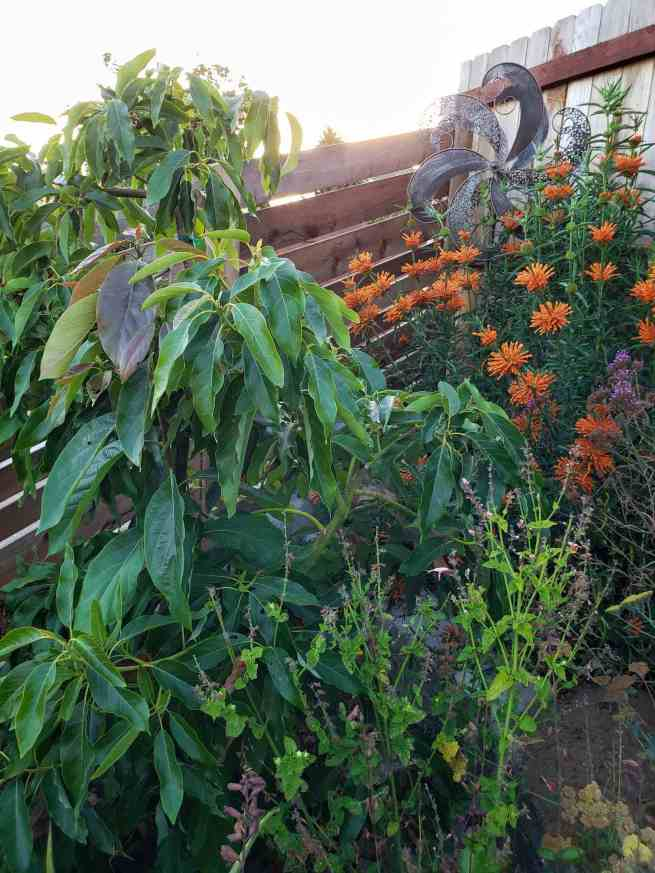 A small avocado tree planted amongst a terraced part of the yard. There are a number of blooming plants around the tree with a variety of pink, purple, yellow and orange flowers.