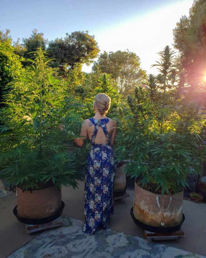 DeannaCat standing amongst three cannabis plants in large fabric grow bags. Her back is to the camera and she is wearing an  open back blue dress with floral patterns. The plants are flowering and stand at least three feet above her head. The setting sun is shining through a tree in the background, casting a warm glow over the top half of the image.