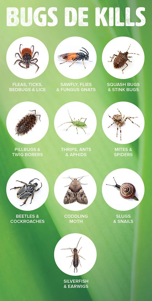 """A diagram showing pictures of various insects that DE can kill. It is labeled """"Bugs DE Kills"""". Depicted are quite a few insects such as mites, spiders, aphids, pillbugs, ticks, fleas, and squash bugs to only name a few."""