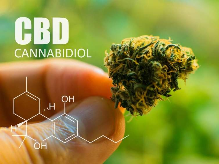 """An image showing a hand holding a small cannabis flower by the stem between their thumb and index finger. It is dark green with many orange hairs, """"CBD"""" with """"Cannabidiol"""" below it and the molecular structure below that are transposed on the image in white lettering."""
