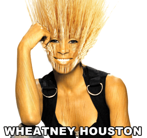 A a spoof photo of Whitney Houston is shown, below lies the name Wheatney Houston which is a funny sourdough starter name pun. The image of Whitney has a superimposed bushel of wheat as her head.