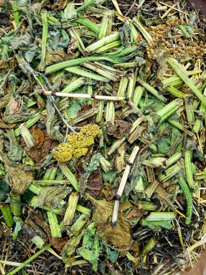 A close up of green mulch is shown that consists of fava bean stalks and leaves, horsetail, yarrow, borage, and comfrey.