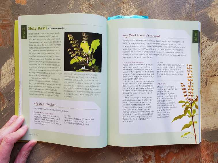 A medicinal herbs book is open to a page about Holy Basil. Recipes are include for a Holy Basil Tincture as well as a Holy Basil Long-Life Vinegar.
