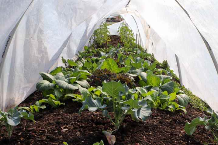 A couple rows of vegetable seedlings and plants are shown underneath row covers. Protect plants from frost with hoops and frost protecting row covers.