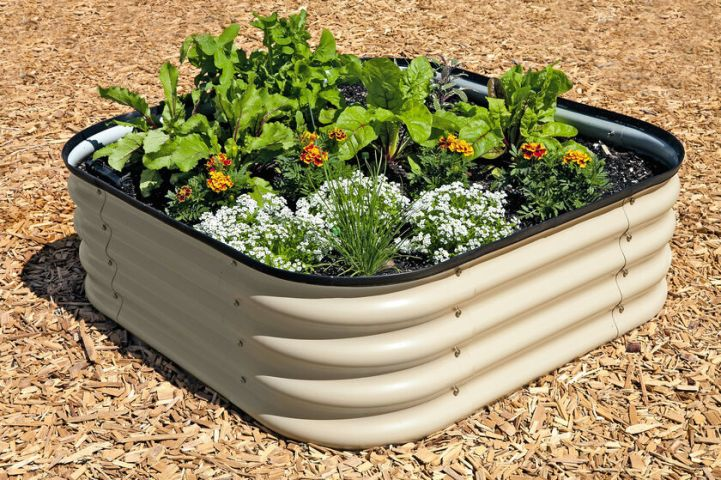 A corrugated galvanized metal raised garden bed is in the shape of a rounded corner square. it is planted out with flowers and beets. Corrugated metal is a good material for raised garden beds that is safe and long lasting.