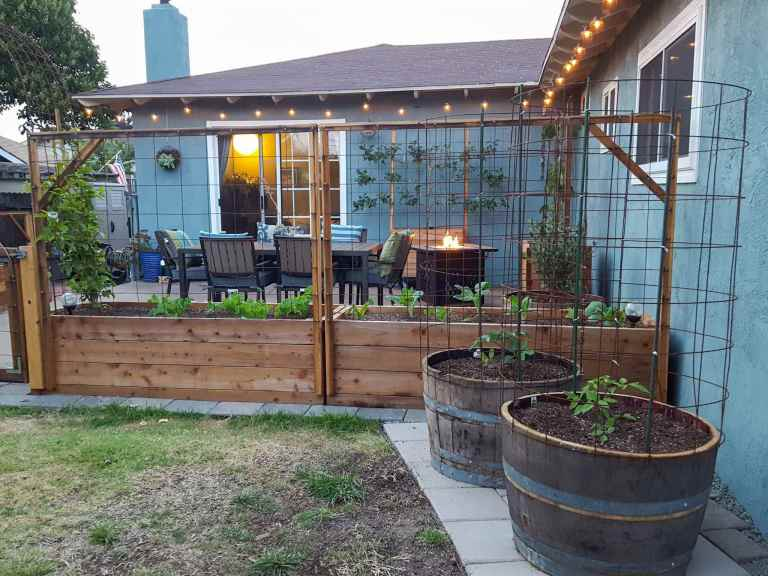A backyard image looking toward the house and patio. There are two wine barrels that have a tomato seedling in each one, beyond that lies raised garden beds that create a fence to the concrete patio. Materials for raised garden beds can vary, depending on your location.