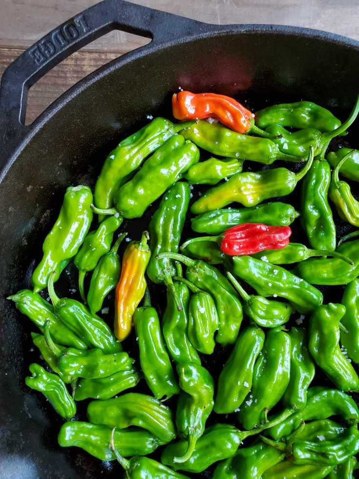 A close up image of a cast iron skillet full of lightly salted green shishito peppers. There are a few that are slightly yellow to red amongst the sea of green. Grow peppers to make your own slightly salted roasted shishito pepper appetizer.