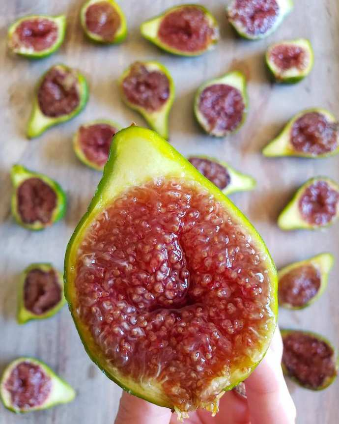 DeannaCat is holding a Honey Delight fig that has been cut in half, revealing its bright strawberry jam colored flesh. There are various figs in the background that have been cut in half, all of them revealing various shades of rich strawberry preserves.