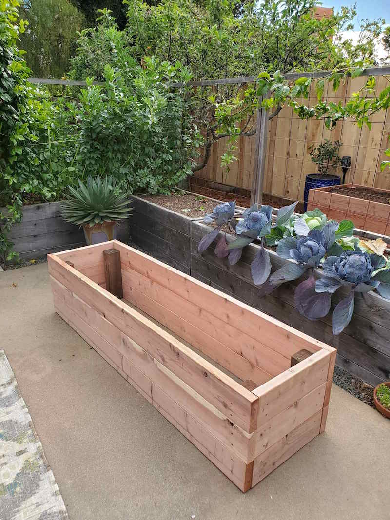 A newly made raised garden bed made out of redwood. It is sitting next to already made garden beds that have cabbage planted in them and another with fava beans. This is a made to be a garden bed on concrete.