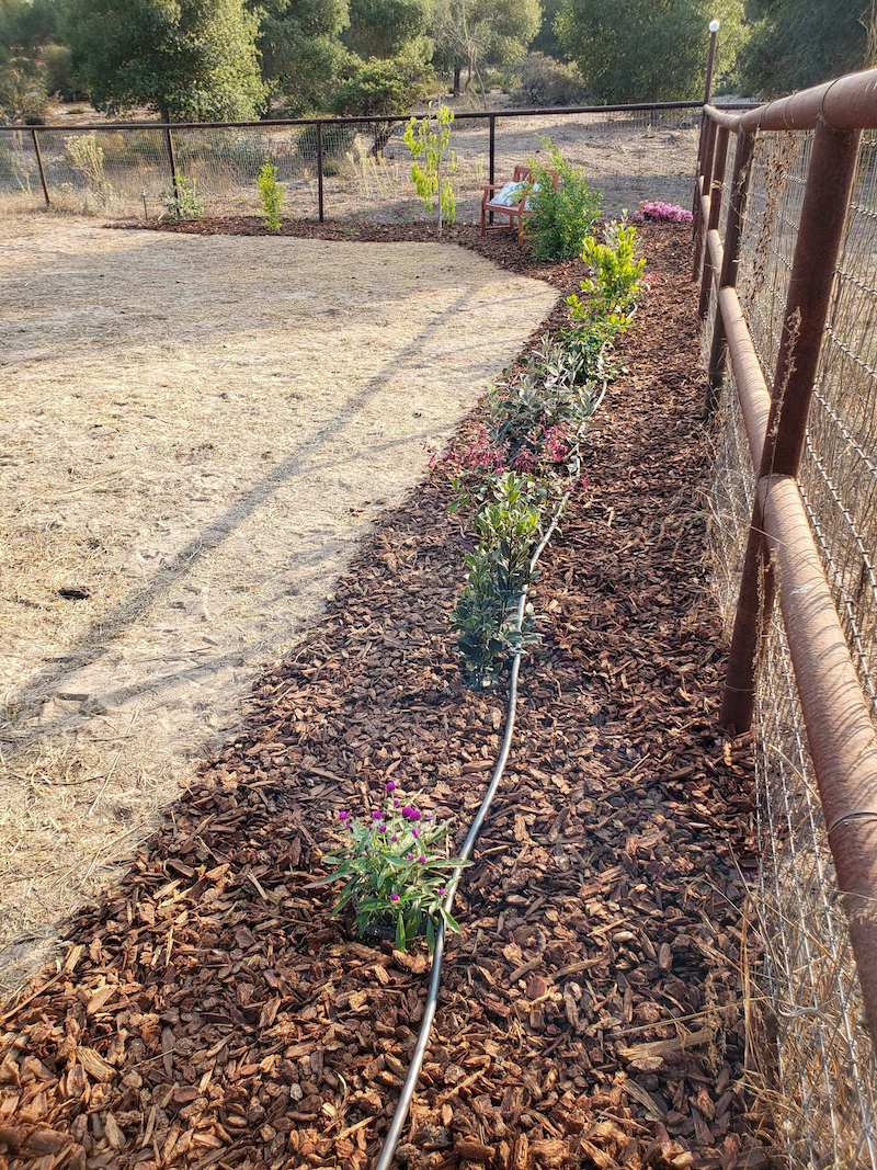 A drip irrigation hose bibb set up along a fence line with shrubs, small trees, and pollinator plants are planted along the fence. Bark is mulching the area in a solid strip along the fence and around the plants with the drip tubing visible sitting on top of the mulch.