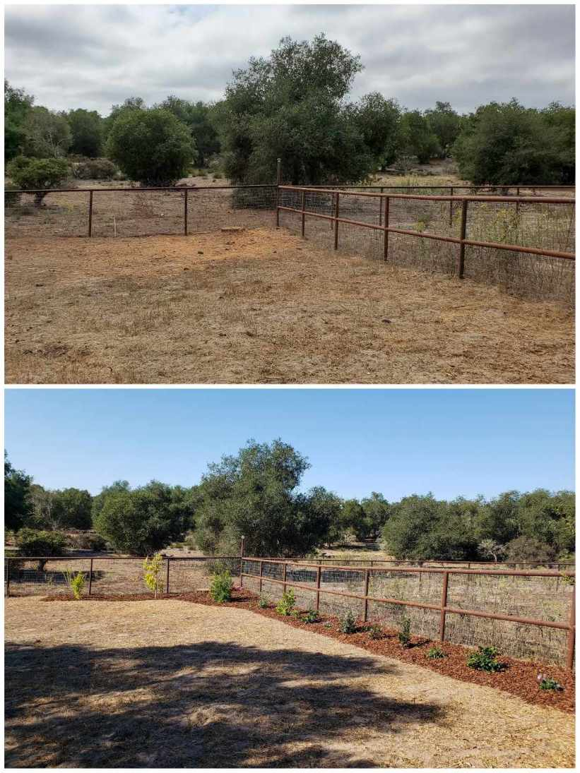 A two part image collage showing the area of the property that will be converted to a drip irrigation hose bibb set up. The first image shows a fenced corner of the property with brown grass and weeds with a background of oak trees. The second image shows the area along the fence line to have been mulched with bark about 3 feet out from the fencing with trees, shrubs, and plants planted in a line along the two sides of the fence. Large oak trees make up the background amongst brown grasses.