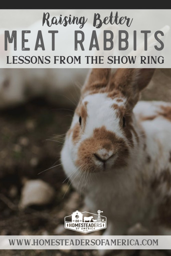 Raising Better Meat Rabbits: Lessons Homesteaders Can Learn from the Show Ring