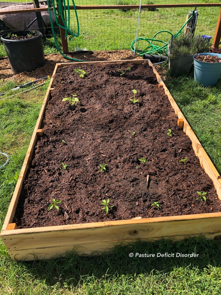 Small garden raised bed
