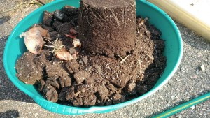 remove soil from pots and trays before reusing