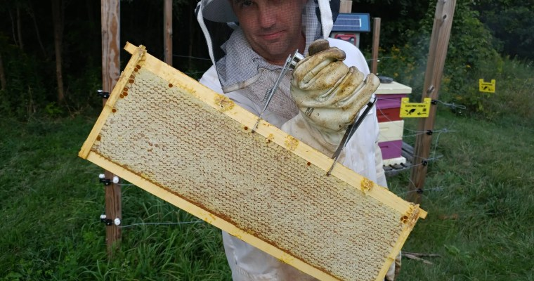 How to get Started with Beekeeping
